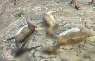 மாரடைப்பால் செத்த 50 மான்கள்.. கஜா புயல் கோரத்தின் மறுபக்கம்