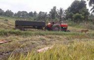 கிழக்கு மாகாணத்தில் பெய்துவரும் மழை காரணமாக அறுவடை பரவலாக பாதிக்கப்பட்டுள்ளது..!!!