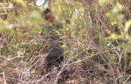 முல்லைத்தீவில் அண்ணன் தூக்கில் தொங்கிய அதே மரத்தில்... தூக்கிட்டு தற்கொலை செய்து கொண்ட தம்பி