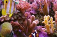 இலங்கைத் தீவைச் சுற்றியுள்ள 90 வீதமான பவளப் பாறைகள் அழிந்து விட்டன