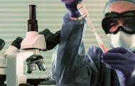 கொரோனா வைரஸிற்கு எதிரான தடுப்பு மருந்தினை எலிகளில் பரீட்சிக்கும் விஞ்ஞானிகள்