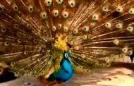பிரம்மனின் அதிசய படைப்பு....!!