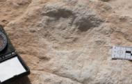 1 லட்சத்து 20 ஆயிரம் ஆண்டுகளுக்கு முந்தைய மனித கால்தடங்கள் சவுதி அரேபியாவில் கண்டுபிடிப்பு!!