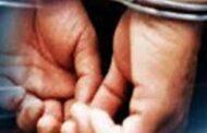 சட்டவிரோதமாக கடலட்டை தொழிலில் ஈடுபட்ட 12 பேர் கைது